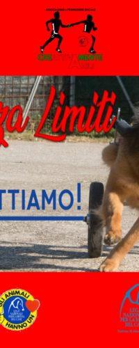 Il Bello Senza Limiti Dog